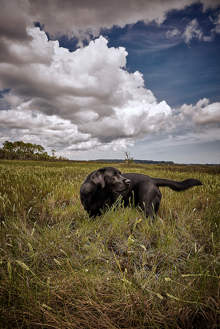 Lifestyle: Hunting - Dutch Island, GA