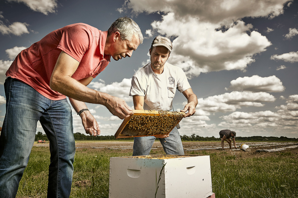 Bee Hive: The Big Red Farm in Lawrenceville, NJ