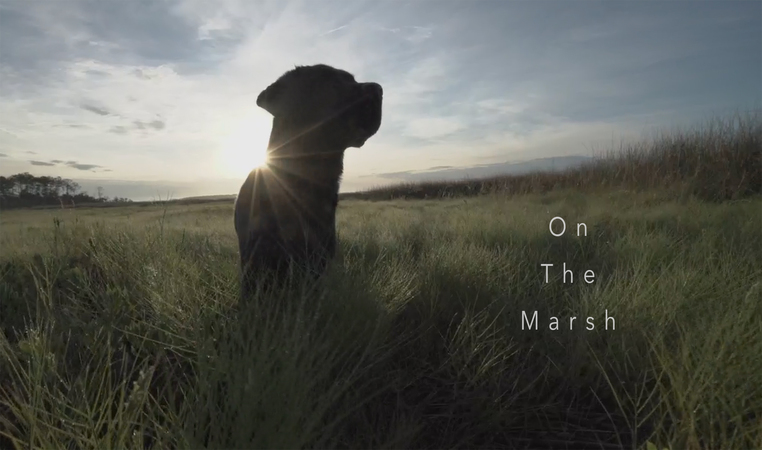 Kuma - On The Marsh